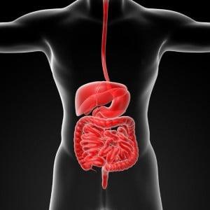 gut digestion irritable bowel IBS coeliac